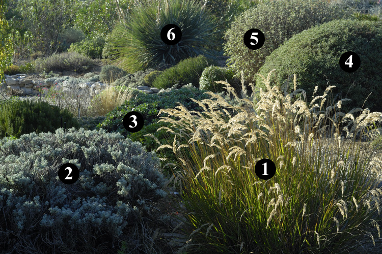 1 stipa calamagrostis 2 santolina neapolitana 39 edward for Jardin sec